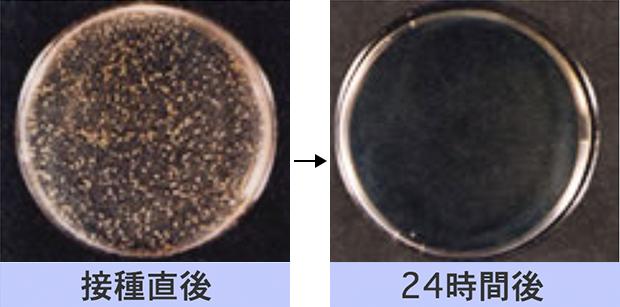 黄色ブドウ球菌の減少